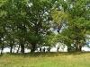 Tolimą praeitį menantis Limonių piliakalnis.