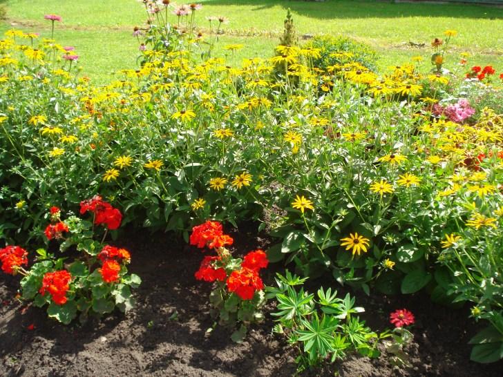 Stasė Karpavičienė myli gėles.