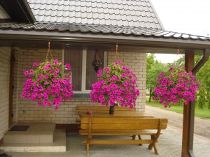 Ryškių gėlių vazonai akį veria Gaivos ir Vyginto Dambrauskų (Lapelių kaimas) kieme.