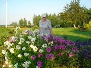 Musninkėliuose gyvenanti Ona Verikienė nustebino įvairiaspalvių flioksų gėlynu.