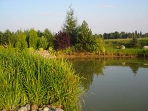 Tvenkinio aplinka - Dikčių sodybos puošmena.