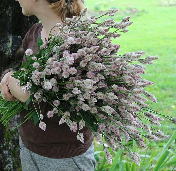 Floristų gaminamoms puokštėms labai tinka ir gėlės ... be puošnių žiedų.
