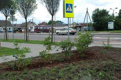 rododendrai.jpg