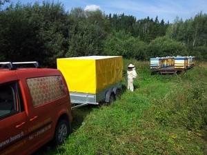 Šįmet vieni bitininkai džiaugiasi surinkę gausų derlių, kiti jį peikia...