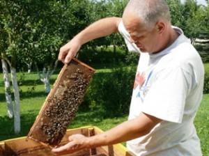 """""""Su tokiomis bitėmis ir dirbti malonu"""", - sako bitininkas Gediminas Žilinskas."""