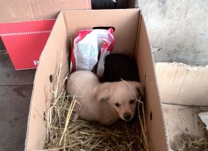 Šie šuniukai prie Kielių parduotuvės buvo palikti pernai gruodžio mėnesį.