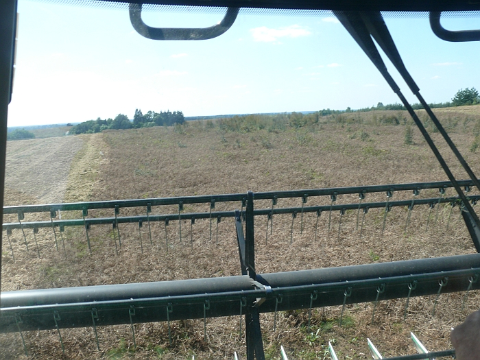 Taip atrodo žirnių laukas pro ūkininko Pauliaus Kartenio kombaino langą.