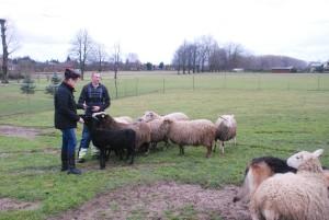 Avytės mėgsta pasmaguriauti tiesiai iš Daivos ir Česlovo rankų.