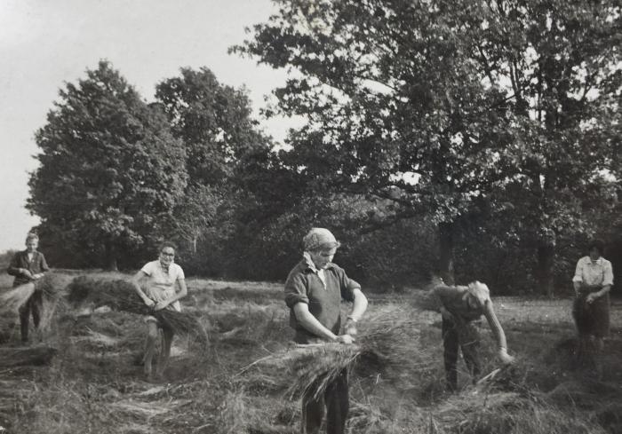Talkininkai Vileikiškių kolūkyje riša linus (pirma iš dešinės - Irmgarda Blusevičienė).