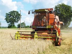 Limonių kaimo ūkininko Albino Gudeikos sklype kertami miežiai.