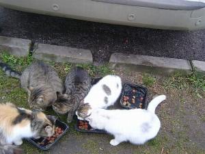 Draugiškai pietaudavo visos.