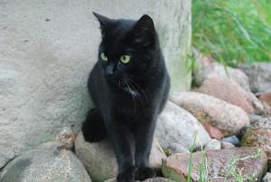 Naujoji sutartis turėtų užtikrinti, kad gatvėse nebeliktų beglobių gyvūnų.