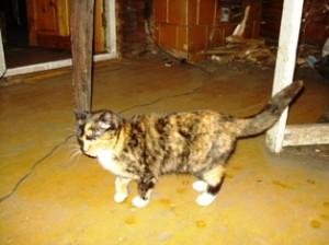 Katė Micė išgelbėjo ne tik sutuoktinių Mačiuikų gyvybę, bet galbūt net ir kaimynų turtą.