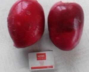 Anciūniškės Aušros Stundienės darže užaugę ridikėliai savo dydžiu primena raudonuosius burokėlius.