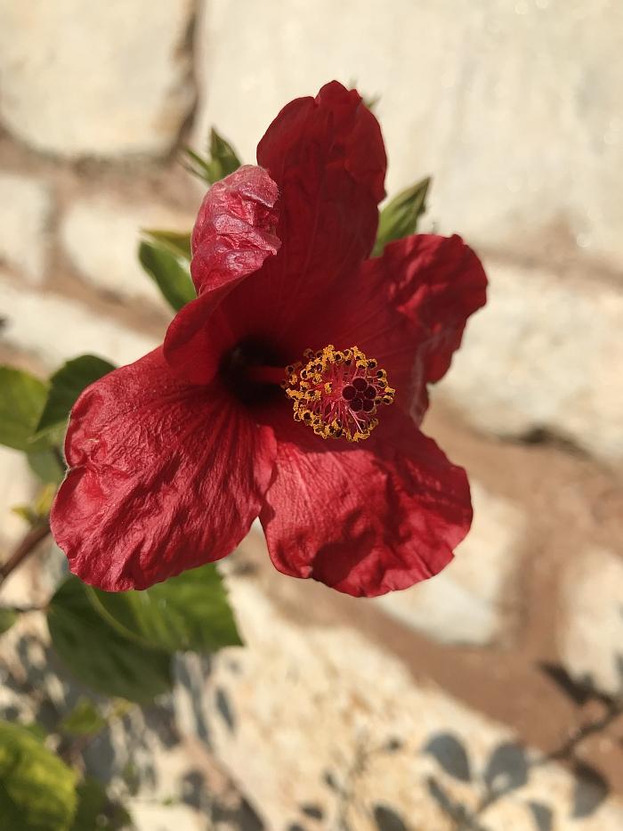 Gėlės Izmire žydi ištisus metus.