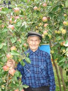 Šiais metais Šemėtų sode bręsta gausus obuolių derlius.