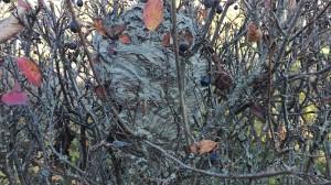 Didžiųjų vapsvų sulipdytą lizdą galima būtų palyginti su vilnų kuodeliu arba su apverstu kibiru.