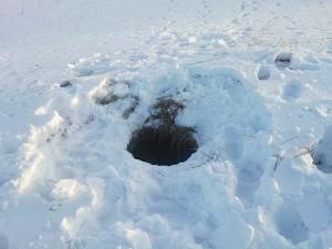 Atviras šulinys, kurį užklojo sniegas - nepastebimas.