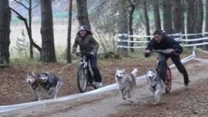 Scooter - dviejų šunų kinkinių su paspirtuku lenktynės greičio ruože.