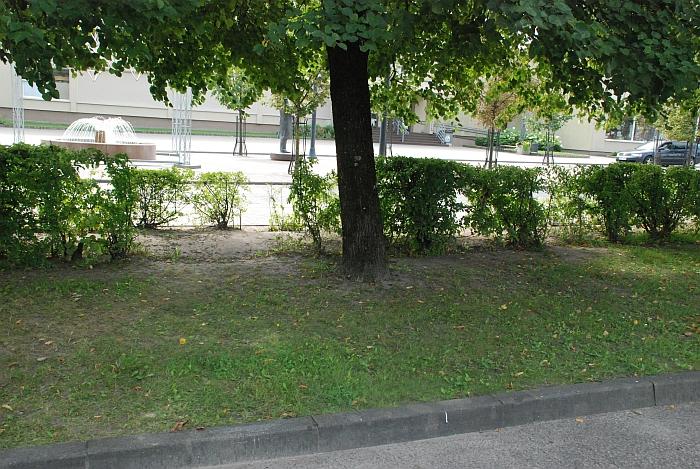 Nuo automobilių stovėjimo aikštelės link Igno Šeiniaus gatvės tiesiai per gyvatvorę arčiau...