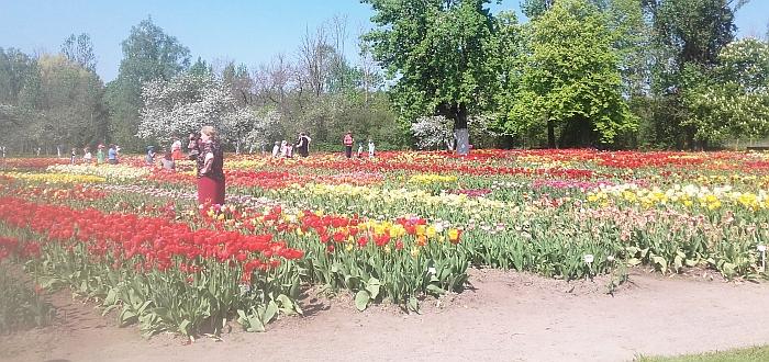 Tulpių žiedų spalvų pasaka - atgaiva mūsų sieloms