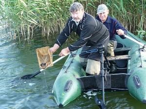 Antanas Lazaravičius į ežerą išleidžia unguriukus.
