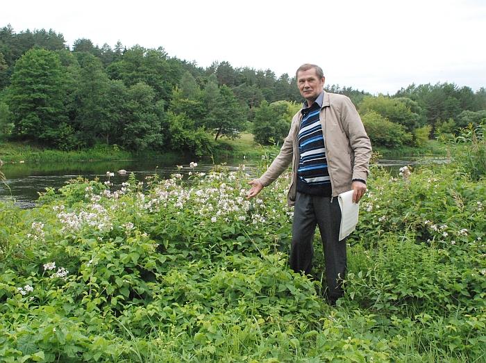 Kernavės girininkas Rimas Kazlauskas rodo laukinio (meškinio) česnako plantaciją, - liaudies medicinoje šis augalas laikomas vos ne panacėja nuo įvairiausių negalavimų ir ligų.