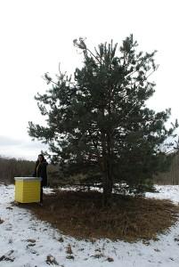 Vilma Strelkova moka bičių nameliui parinkti gražią vietą.